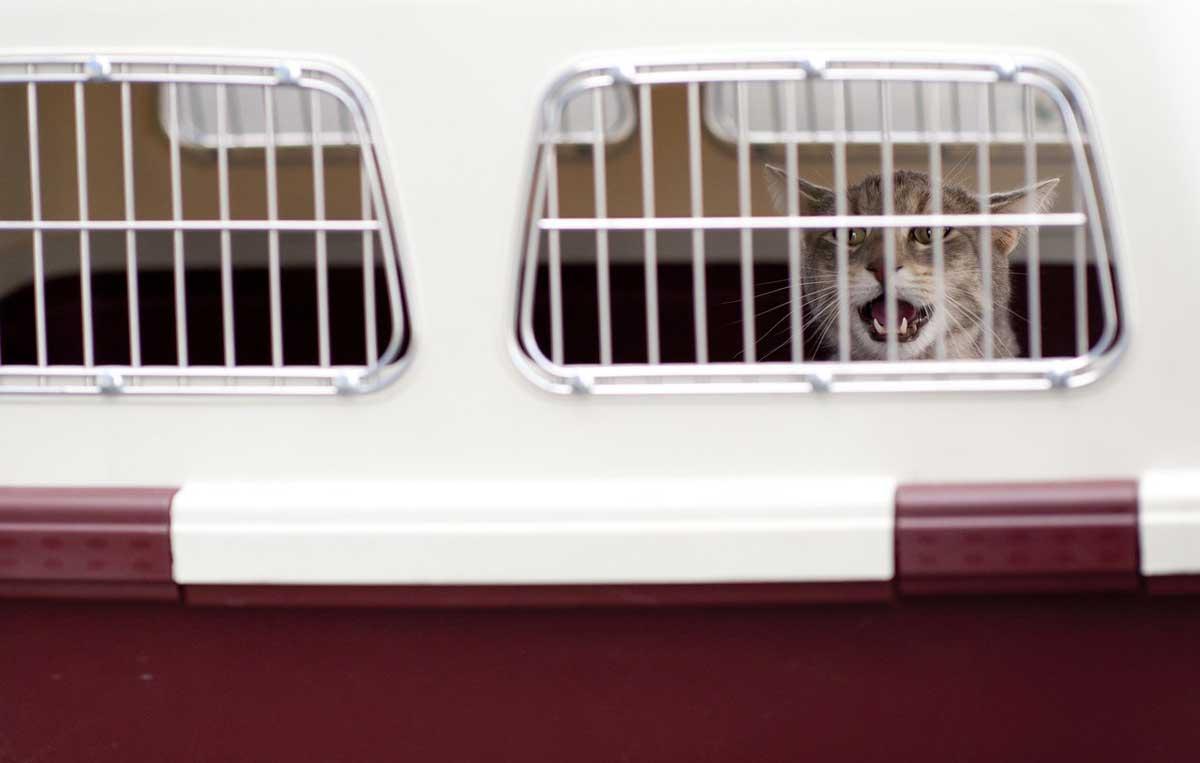 Pet Transport Romania