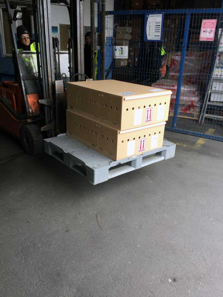 Live Animal Shipping