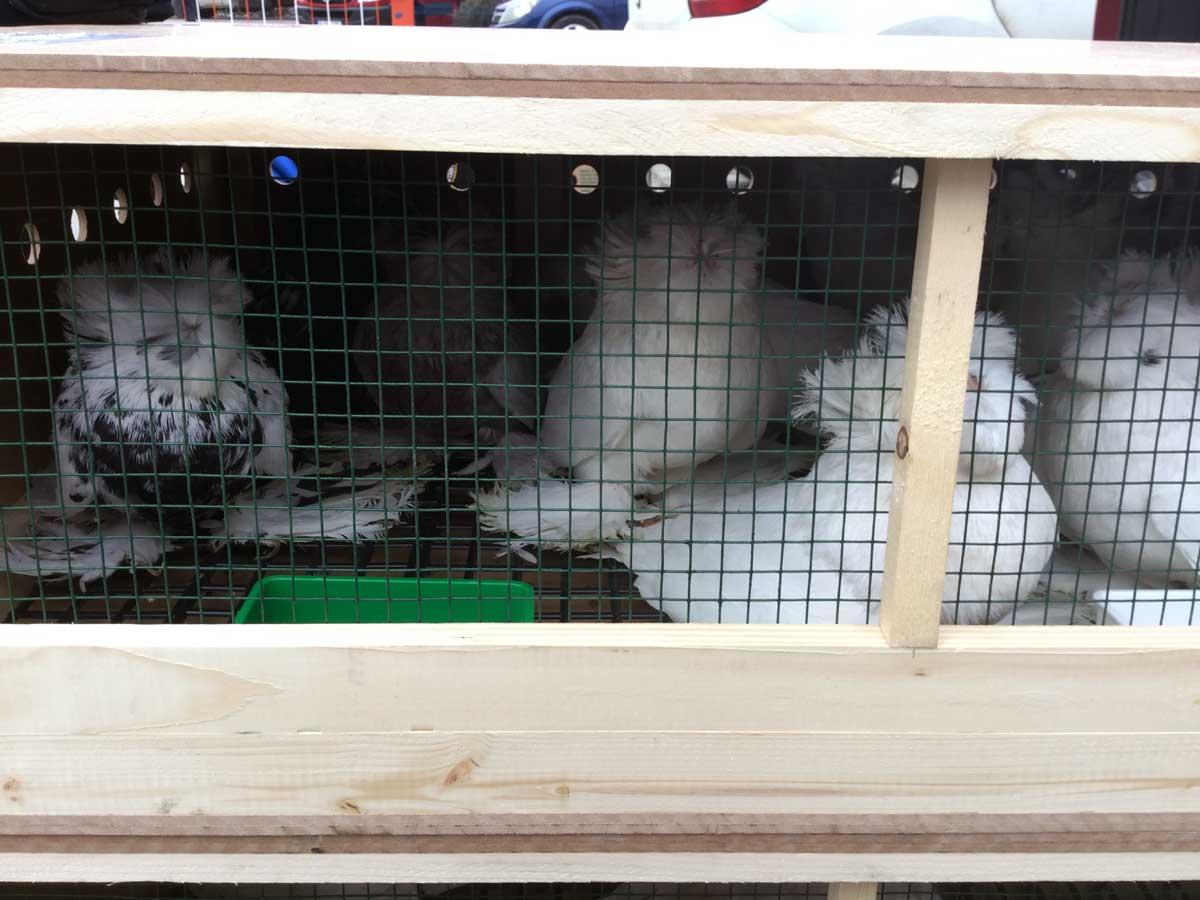 Pet Shipping Canada
